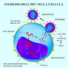 L 39 auto test hiv per una maggiore presa di coscienza farmacia monzali - Test hiv periodo finestra 2016 ...